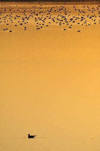 gnubier_sunset