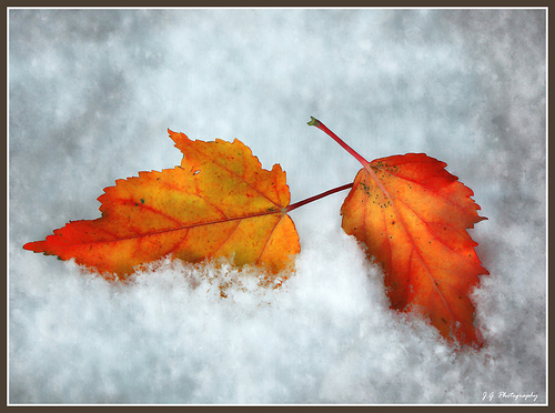 Fall Colors In Eraly Morning Snow