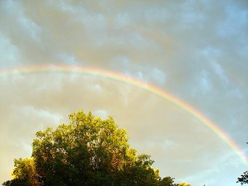 Regenbogen mcdlttx