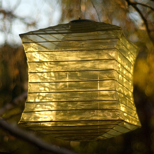 Lantern and Birch Tree